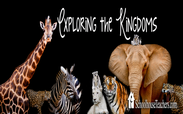 blog-exploring-the-kingdoms