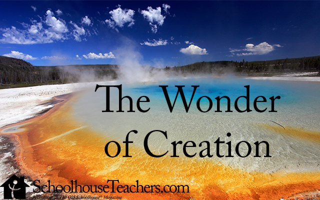 thewonderofcreation