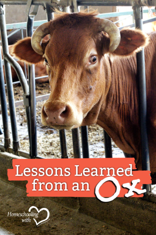 Lessons Learned from an Ox - The Value of a Parable