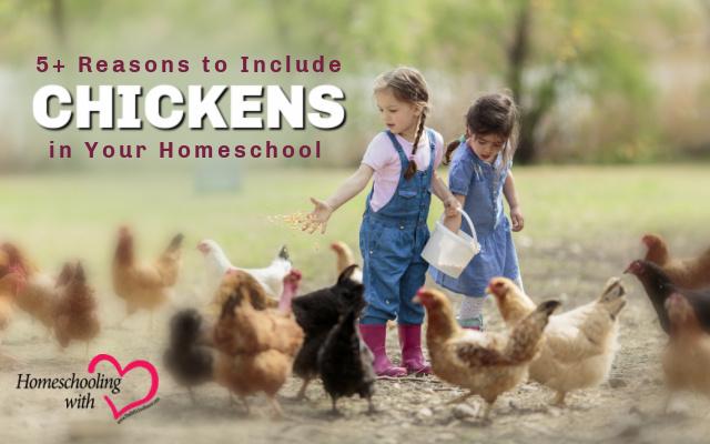 chickens in homeschool