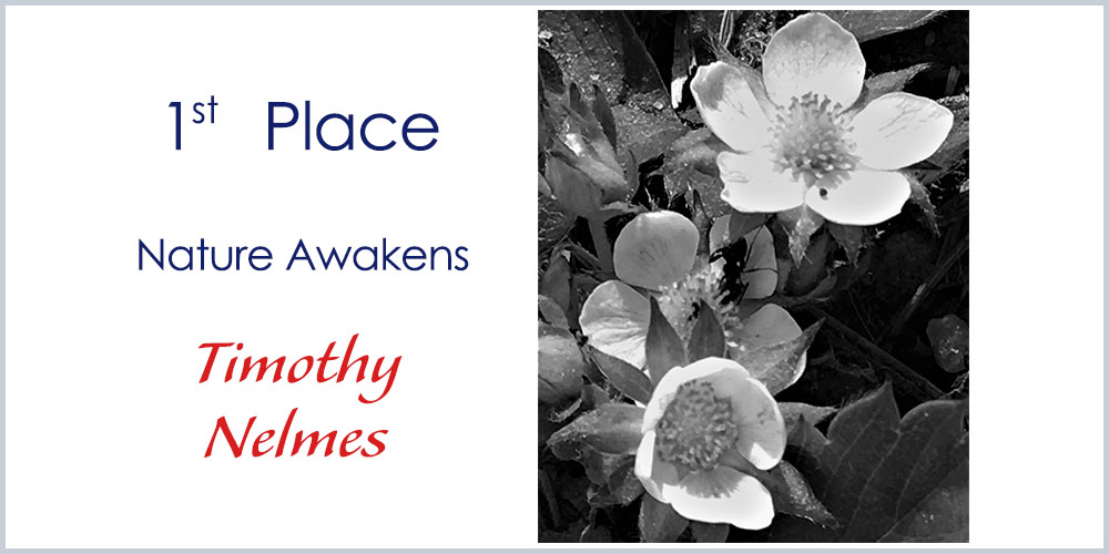 First Place winner - 11-14 Photography Nature Awakens by Timothy Nelmes