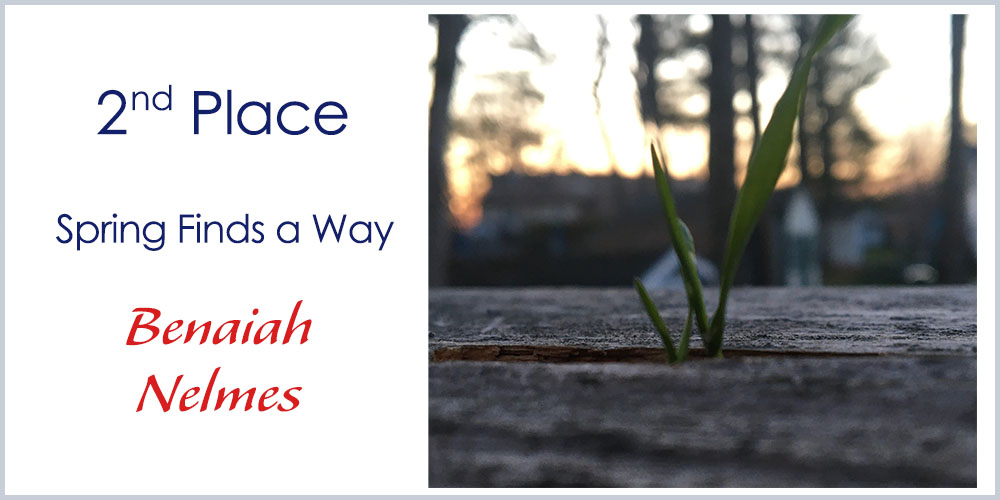 Second place winner - photography - Spring Finds a Way by Benaiah Nelmes