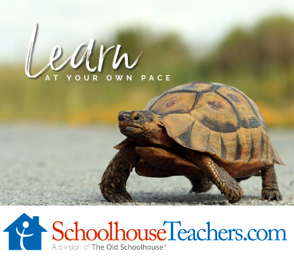 A turtle crossing a roadway and the words Learn and Your Own Pace